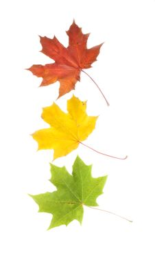 Free Red, Yellow, Green Leaves Royalty Free Stock Photos - 21468108
