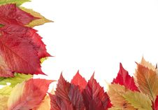 Autumn Leaves Over White Royalty Free Stock Photography