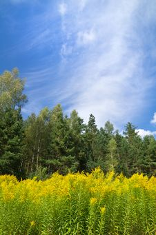 Free Summer Landscape Stock Photo - 21475030