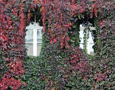 Free Autumn Colors Stock Photos - 21476603