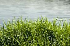 Free Grass And Water Stock Photos - 21476623