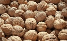 Free Walnuts Stock Images - 21479984