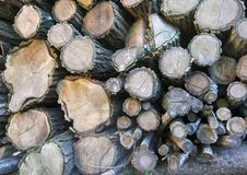 Free Wood Royalty Free Stock Images - 21487939