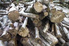 Free Wood Stock Image - 21487951