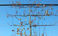 Free Autumn Tree Royalty Free Stock Image - 21488806