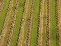 Free Italian Vineyard In Spring Royalty Free Stock Photos - 21491488