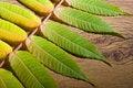 Free Autumn Leaf Royalty Free Stock Photo - 21497455