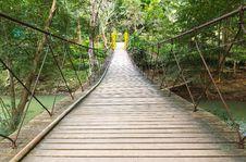 Free Rope Walkway Through The Treetop Royalty Free Stock Photos - 21491088
