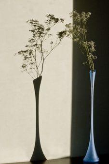 Free Gypsophila Bungeana In Glass Vase Stock Photo - 21492100