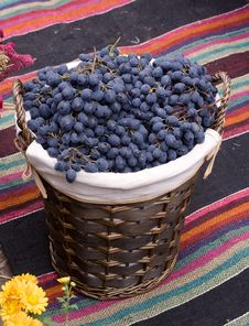 Free Basket With Blue Grapes Royalty Free Stock Photos - 21493818
