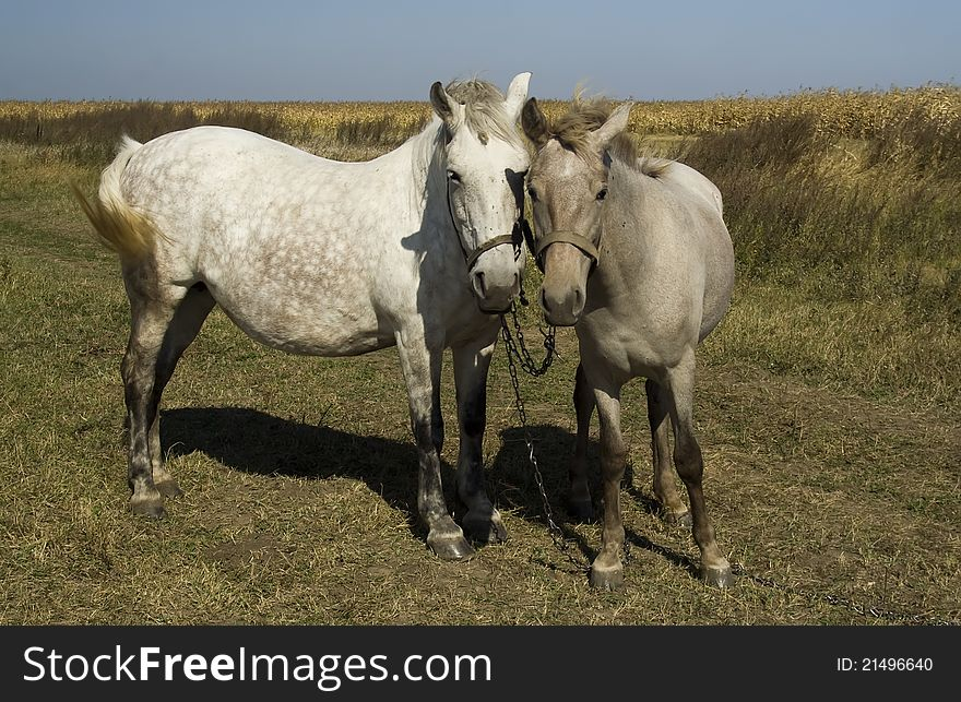 Horse and foal looking on you