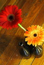 Free Red And Orange Flowers Royalty Free Stock Photography - 2152157