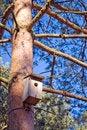 Free Bird House On Tree Trunk. Royalty Free Stock Photos - 2154788