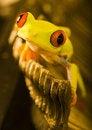 Free Frog On The Typewriter Stock Photo - 2159930