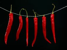 Free Drying Peppers Stock Photography - 2150522