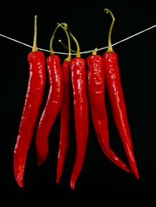 Free Drying Peppers Royalty Free Stock Photography - 2150527
