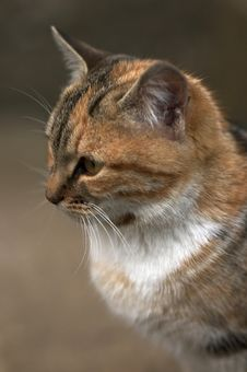 Free Cat Vertical Portrait Stock Images - 2151684