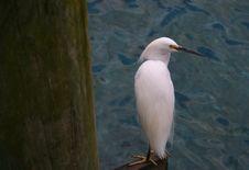 Free White Sea Bird Stock Image - 2152151