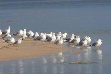Free Seagull Row Stock Photos - 2152223
