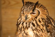 Free Eagle Owl Stock Photo - 2155730