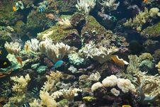 Coral Reef With Fish Stock Image