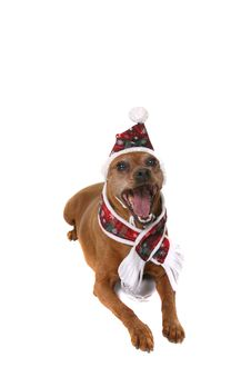 Free Humorous Puppy Royalty Free Stock Photo - 2156835