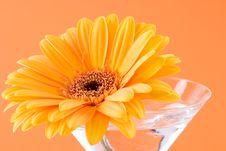 Free A Yellow Gerbera Daisy Royalty Free Stock Image - 2158006