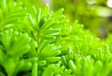 Free Green Grass Royalty Free Stock Photo - 21500475