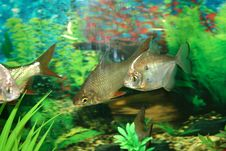 Free Aquariums Royalty Free Stock Image - 21501926