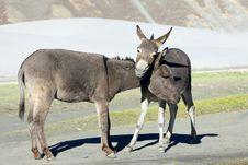 Free Donkey On Farm Royalty Free Stock Images - 21504399