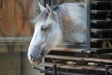 Free Horse Royalty Free Stock Photo - 21504745
