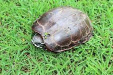 Free Turtle Royalty Free Stock Photos - 21513878