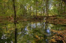 Free Lake In Forest Stock Photos - 21515583