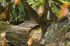 Free Steps In Forest Stock Photos - 21515613