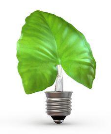 Free Light Bulb Leaf Royalty Free Stock Photo - 21517955