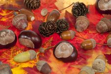 Free Acorn And Chestnut Stock Image - 21522921