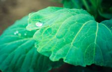 Free Water Drops On The Fresh Green Leaf Royalty Free Stock Image - 21523256
