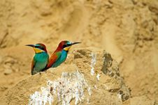 Bee-eaters Royalty Free Stock Photography