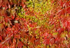 Free Autumn Leaves Royalty Free Stock Photography - 21529337
