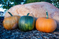 Free Harvested Pumpkins Stock Images - 21535324