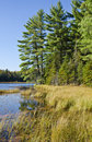 Free Evergreen Trees By A Lake Royalty Free Stock Photography - 21537297