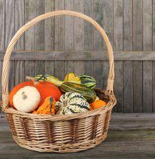 Free Basket Of Squash Stock Photos - 21535993