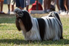 Free Dog Royalty Free Stock Images - 21536169
