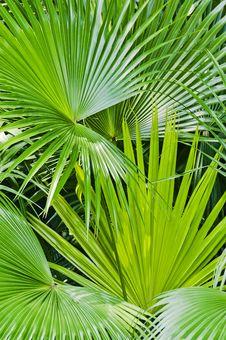 Free Palm Leaf Royalty Free Stock Image - 21537216