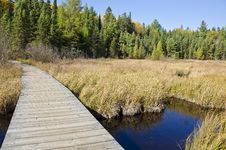 Free Boardwalk In Algonquin Park Ontario Stock Photo - 21537530