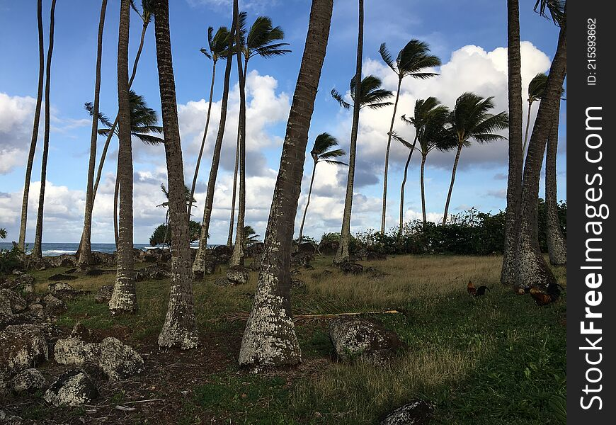 Spring at Hikinaakala Heiau in Wailua on Kauai Island, Hawaii.
