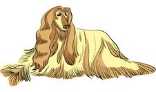 Free Vector Dog Afghan Hound Breed Color Royalty Free Stock Images - 21543479