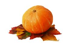 Free Pumpkin On Leaves Isolated On A White Royalty Free Stock Photography - 21547847