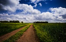 Free Road Though The Meadow Royalty Free Stock Images - 21550669