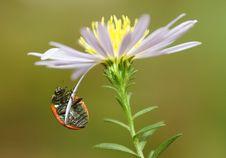 Free Ladybird Royalty Free Stock Photography - 21554617
